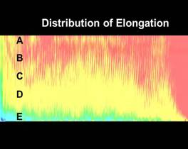distribution of elongation
